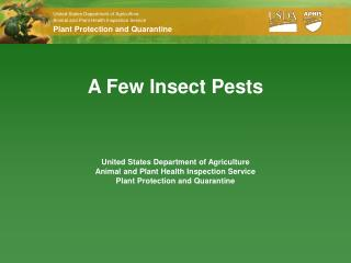 A Few Insect Pests