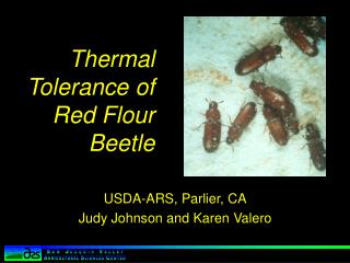 Thermal Tolerance of Red Flour Beetle