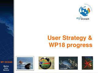 User Strategy &  WP18 progress