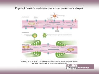 Figure 5 Possible mechanisms of axonal protection and repair