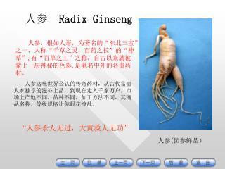 人参 Radix Ginseng