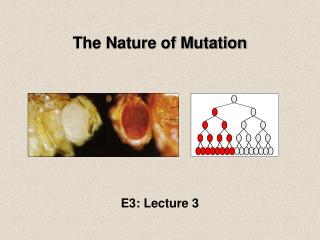 The Nature of Mutation