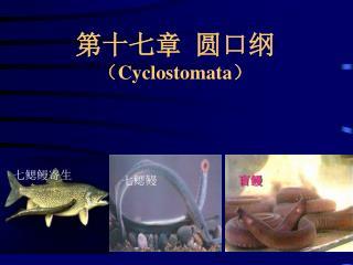第十七章  圆口纲 ( Cyclostomata )