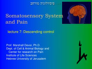 Somatosensory System and Pain