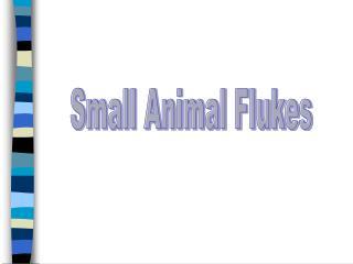 Small Animal Flukes