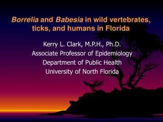 Borrelia  and  Babesia  in wild vertebrates, ticks, and humans  in Florida