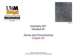 Chemistry 501   Handout 24   Genes and Chromosomes Chapter 24