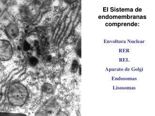 El Sistema de endomembranas comprende: