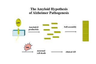 The Amyloid Hypothesis  of Alzheimer Pathogenesis