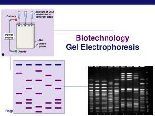 Biotechnology Gel Electrophoresis