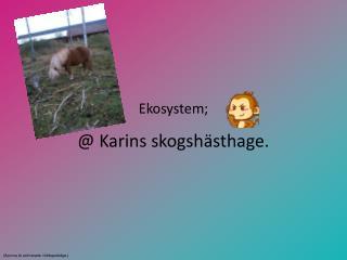 Ekosystem; @ Karins skogshästhage.