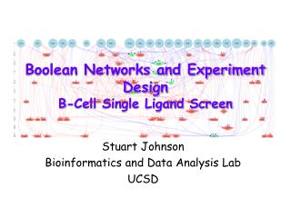 Boolean Networks and Experiment Design B-Cell Single Ligand Screen