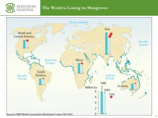 The World is Losing its Mangroves