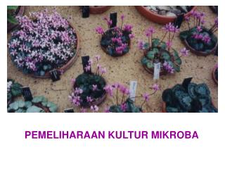 PEMELIHARAAN KULTUR MIKROBA