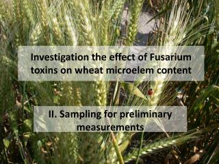 Investigation the effect of Fusarium toxins on wheat microelem content