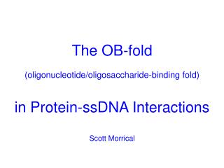 The OB-fold (oligonucleotide/oligosaccharide-binding fold) in Protein-ssDNA Interactions