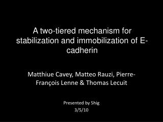A two-tiered mechanism for stabilization and immobilization of E-cadherin