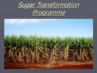 Sugar Transformation Programme