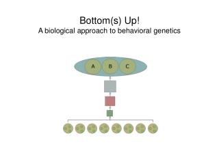 Bottom(s) Up! A biological approach to behavioral genetics