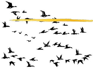Migration:  It isn�t just for the Birds