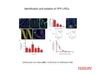 Identification and isolation of YFP–LRCs.