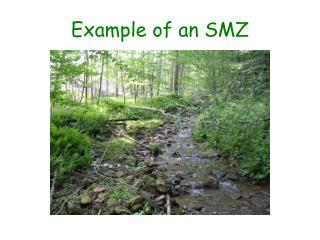 Example of an SMZ