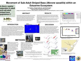 Movement of Sub-Adult Striped Bass ( Morone saxatilis ) within an Estuarine Ecosystem