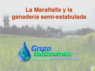 La Maralfalfa y la ganadería semi-estabulada