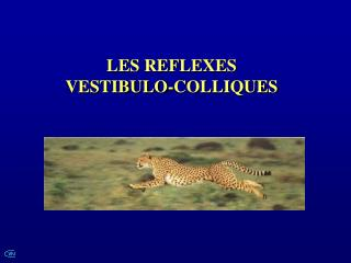 LES REFLEXES VESTIBULO-COLLIQUES