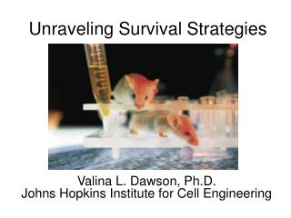 Unraveling Survival Strategies