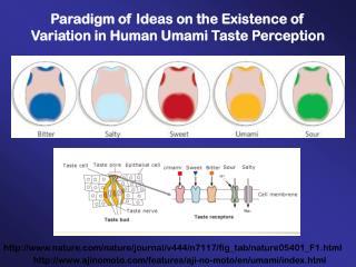 Paradigm of Ideas on the Existence of Variation in Human Umami Taste Perception