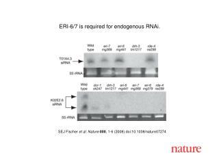 S EJ Fischer et al. Nature 000 , 1- 6  (2008) doi:10.1038/nature07 274