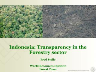 Indonesia: Transparency in the Forestry sector  Fred Stolle World Resources Institute  Forest Team