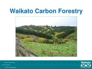 Waikato Carbon Forestry