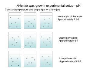 Artemia spp.  growth experimental setup - pH