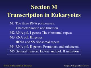 Section M   Transcription in Eukaryotes