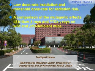 Low dose-rate irradiation and threshold dose-rate for radiation risk.