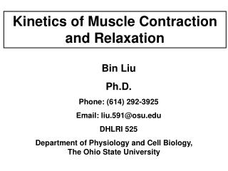 Kinetics of Muscle Contraction and Relaxation