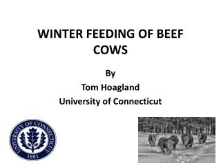 WINTER FEEDING OF BEEF COWS