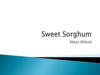 Sweet Sorghum