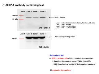 (1) SHIP-1 antibody confirming test