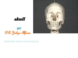skull  BY:                  DR.Yahya Alfarra     CANADIAN BOARD IN DENTISTRY
