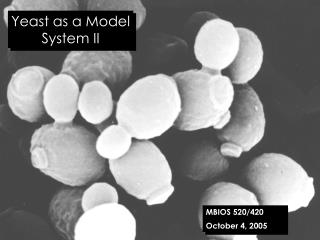 Yeast as a Model System II
