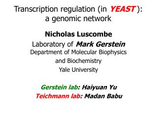 Transcription regulation (in  YEAST  ):  a genomic network
