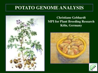 POTATO GENOME ANALYSIS