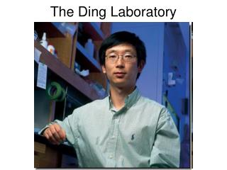 The Ding Laboratory