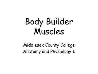 Body Builder  Muscles
