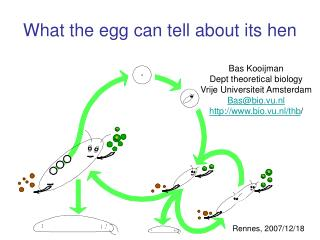 What the egg can tell about its hen