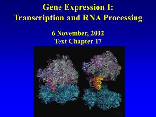 Gene Expression I: Transcription and RNA Processing 6 November, 2002 Text Chapter 17