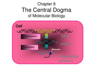Chapter 8 The Central Dogma  of Molecular Biology